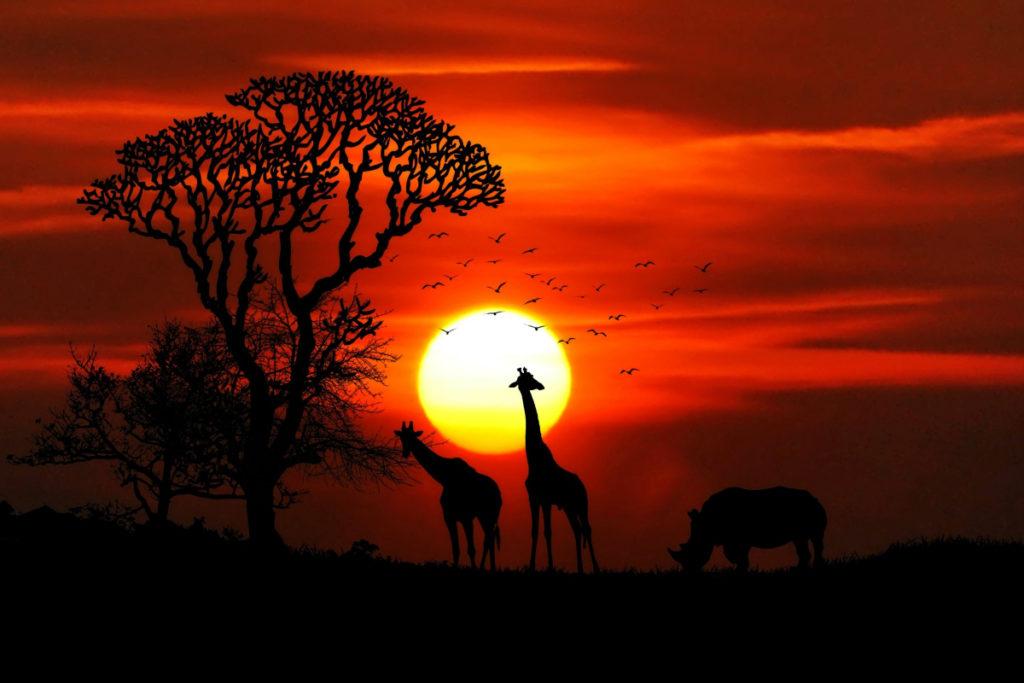 besøge afrika